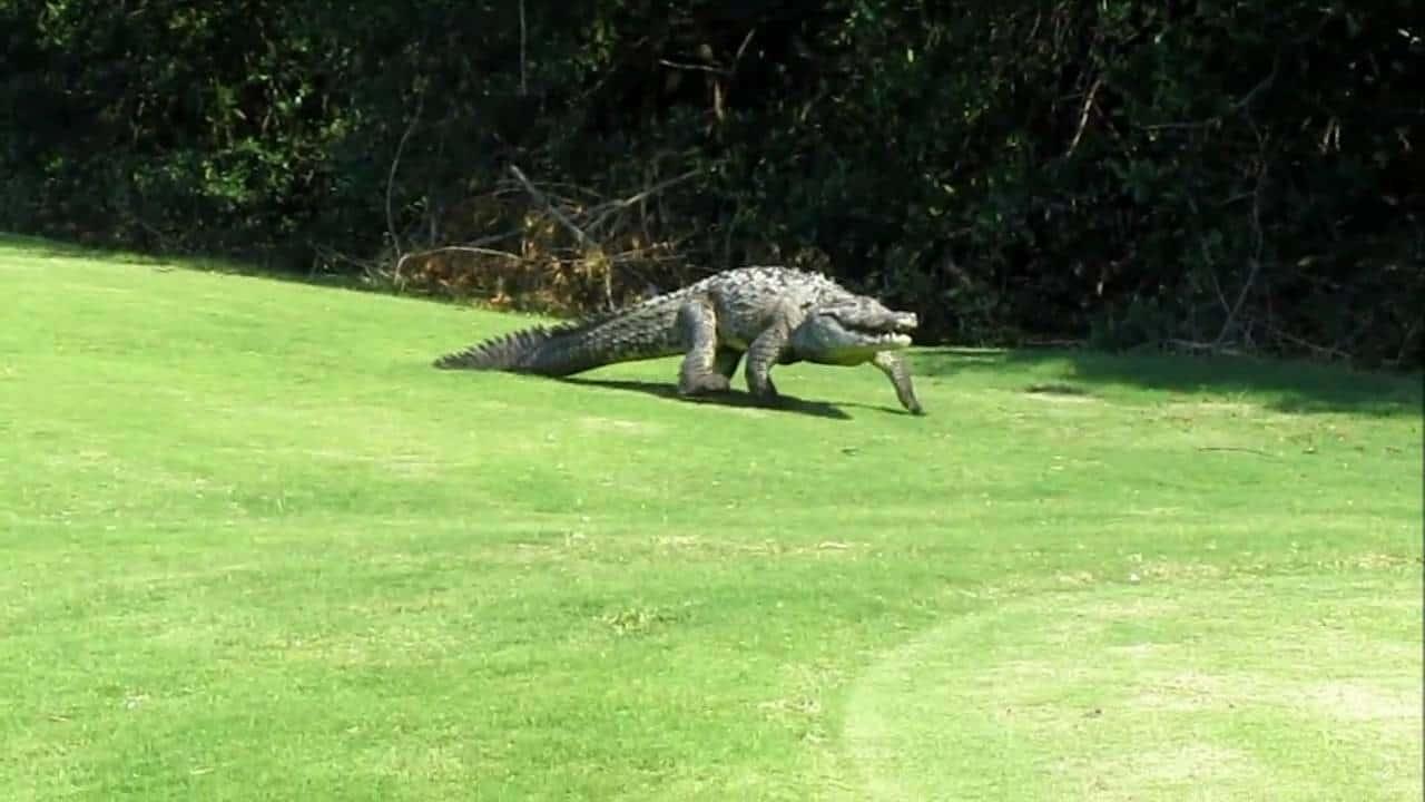 crocs in puerto vallarta- Casa Yvonneka